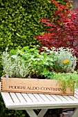 MIXED HERB WINE BOX PLANTED WITH HERBS INCLUDING PARSLEY,MINT, LAVENDER THYME AND SANTOLINA AND MARIGOLDS