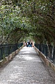 NERIUM OLEANDER TUNNEL,  GENERAL LIFE ALHAMBRA PALACE, GRANADA SPAIN.