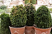 BUXUS IN CONTAINERS ALHAMBRA PALACE, GRANADA SPAIN.