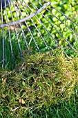 RAKING MOSS FROM LAWN