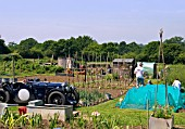 ALLOTMENT OF GERRY AND LEN BULL , ESSEX ENGLAND.