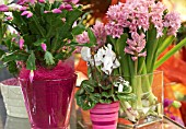 HOUSEPLANTS WITH CUT HYACINTHS