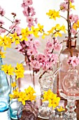 BRANCHES OF FORSYTHIA AND BLIREIANA PLUM BLOSSOMS IN GLASS VASES ON TABLE
