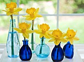 NARCISSUS DUTCH MASTER IN BLUE GLASS VASES
