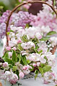 BLOSSOMS OF MALUS AND SYRINGA VULGARIS IN BASKET IN SPRING