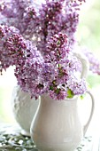 SYRINGA VULGARIS IN VINTAGE WHITE PITCHERS