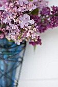 SYRINGA VULGARIS, BOUQUET IN SPRING