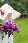 SYRINGA VULGARIS, COMMON LILAC, ON WHITE PICKET FENCE WITH SUN HAT