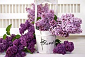 SYRINGA VULGARIS, COMMON LILAC, IN WOODEN BUCKET ON WHITE PORCH BENCH