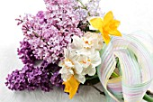 SPRING BOUQUET OF SYRINGA VULGARIS , MALUS BLOSSOM, NARCISSUS SWEETNESS, NARCISSUS CHEERFULNESS AND NARCISSUS SIR WINSTON CHURCHILL