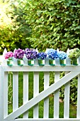 HYDRANGEA MACROPHYLLA NIKKO BLUE, GLOWING EMBERS, ENDLESS SUMMER IN CANNING JARS