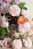 ROSA A SHROPSHIRE LAD, ROSA EGLANTYNE AND ROSA LADY EMMA HAMILTON AND RUBUS FRUTICOSUS  IN VINTAGE TIN