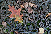 AUTUMN LEAVES ON ORNATE IRON BENCH