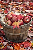 APPLES AND LEAVES IN AUTUMN