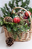 PSEUDOTSUGA MENZIESII, DOUGLAS-FIR BOUGHS, ILEX AND RHAMNUS ALATERNUS VARIEGATUS IN HOLIDAY BASKET