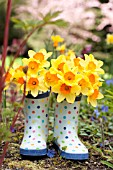 NARCISSUS AMBERGATE IN POLKA DOT GARDEN BOOTS