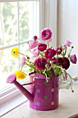 RANUNCULUS ASIATICUS IN PINK POLKA DOT WATERING CAN