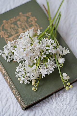 SYRINGA_VULGARIS_HYACINTHOIDES_HISPANICA_CONVALLARIA_MAJALIS_WITH_ANTIQUE_BOOK