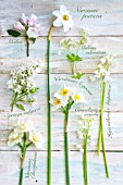 MIXED WHITE FLOWERS AND LABELS