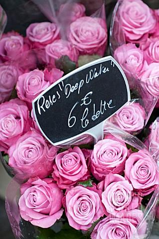 роза дип ватер фото