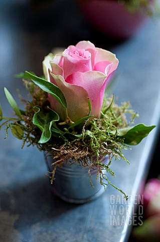 ROSE_IN_ZINC_CONTAINER