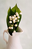 CONVALLARIA MAJALIS, LILY OF THE VALLEY, IN WHITE PITCHER