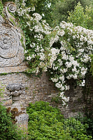 CLIMBING_ROSES_ON_ORNAMENTAL_STONE_WALL_AT_CHATEAU_DE_BRECY