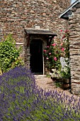 LAVANDULA LINED PATHWAY TO STONE COTTAGE WITH ROSES IN SUMMER