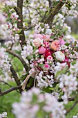MALUS X EVERESTE  SPRING BOUQUET OF PINK ROSES  RANUNCULUS AND APPLE BLOSSOMS OF THE EVERESTE CRABAPPLE TREE