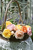 ROSA LADY EMMA HAMILTON, ROSA GRAHAM THOMAS, ROSA A SHROPSHIRE LAD AND ROSA MARY ROSE IN BASKET