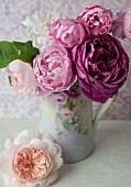ROSA A SHROPSHIRE LAD, ROSA MARY ROSE, ROSA OTHELLO AND ROSA GENTLE HERMIONE IN VINTAGE PITCHER