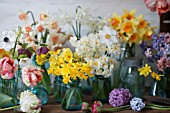 NARCISSUS, TULIPA, HYACINTH ORIENTALIS AND RANUNCULUS