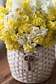 NARCISSUS CHEERFULNESS, SIR WINSTON CHURCHIL AND BRIDAL CROWN IN BASKET