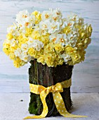 NARCISSUS CHEERFULNESS, SIR WINSTON CHURCHILL AND BRIDAL CROWN IN BARK BASKET