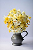 MIXED NARCISSUS FALCONET, SWEETNESS, CHEERFULNESS, TETE A TETE, BRIDAL CROWN AND SIR WINSTON CHURCHIL IN PEWTER MUG