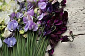 LATHYRUS ODORATUS WHITE SUPREME, WINTER SUNSHINE BLUE, WINTER SUNSHINE LAVENDER, DARK PASSION AND WINDSOR