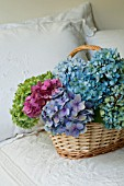 HYDRANGEA MACROPHYLLA NIKKO BLUE, GLOWING EMBERS AND ENDLESS SUMMER IN BASKET ON BED WITH EMBROIDERED LINEN