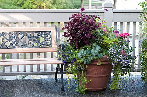 LARGE_OUTDOOR_CONTAINER_WITH_ANNUALS_INCLUDING_NICOTIANA_SCENTED_GERANIUM_SNAPDRAGON_AND_COLEUS