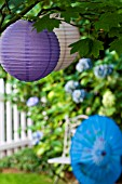 CHINESE SILK PARASOL IN GARDEN WITH WHITE PICKET FENCE AND HYDRANGEA