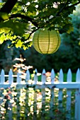 CHINESE PAPER LANTERNS LIT BY MORNING SUN IN GARDEN WITH WHITE PICKET FENCE AND GATE