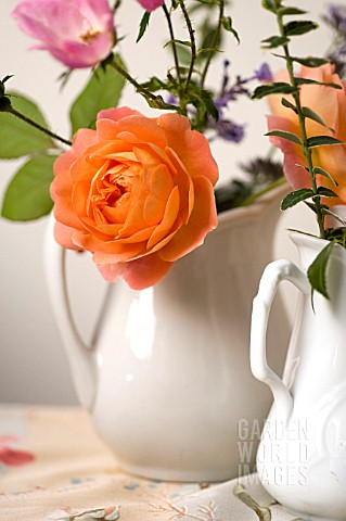 MIXED_ROSES_IN_PITCHER