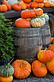 HEIRLOOM PUMPKINS (CUCURBITA PEPO ROUGE VIF DETAMPES AND JARRAHDALE) IN AUTUMN FARM DISPLAY