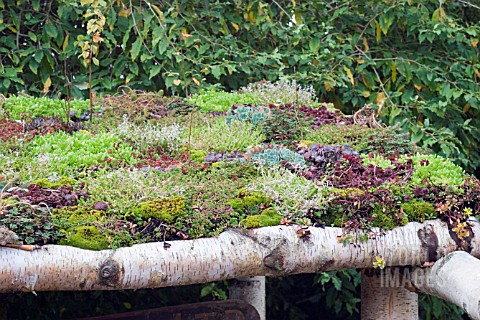VARIOUS_SUCCULENTS_LOG_ROOF