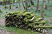 OLD LOG PILE IN COPPICED WOODLAND