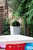 THE DRAWING ROOM GARDEN  URBAN LONDON GARDEN  DESIGNED BY: EARTH DESIGNS.  BUXUS IN TALL CONTAINER WITH CHAIN SCREEN AND FURNITURE.