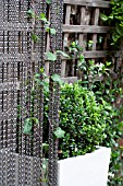 THE DRAWING ROOM GARDEN  URBAN LONDON GARDEN  LONICERA CLIMBING THROUGH CHAIN SCREEN.  DESIGNED BY: EARTH DESIGNS.