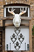 THE DRAWING ROOM GARDEN  URBAN LONDON GARDEN  ILLUMINATED MOOSE HEAD TROPHY  DESIGNED BY: EARTH DESIGNS.