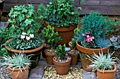 WINTER CONTAINERS GRAVEL MULCH HEDERA CYCLAMEN GRASSES BUXUS