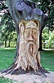 FACE CARVED ON DEAD TREE TRUNK