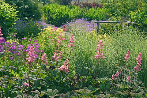 RODGERSIA_AND_PRIMULA_AT_WETLANDS_GARDEN__NATIONAL_BOTANIC_GARDEN_OF_WALES